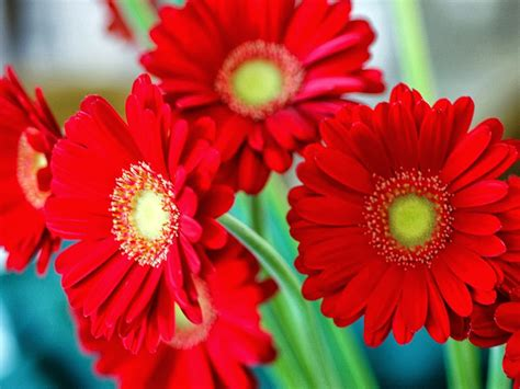 types of reds different types of flowers with pictures and names
