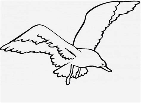 drawings of a sea bird clipart best sea bird clipart flight drawing pencil and in color sea