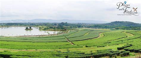singha park chiang rai boon rawd farm review