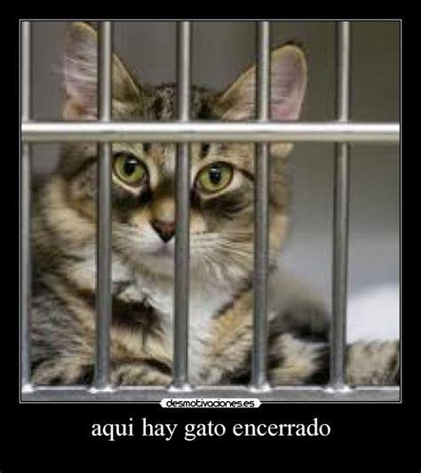 el gato encerrado 191 est 225 encerrado el gato en la habana