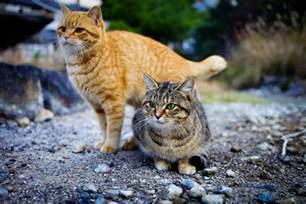 tashirojima the island for cat people cat island