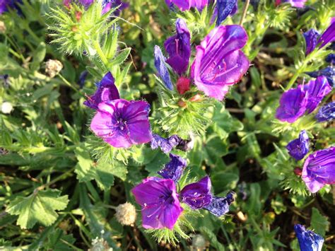common garden flowers pictures and names garden flower names and picture best plants for trough