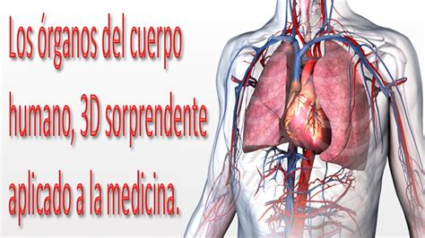 imagenes figurativas del cuerpo humano cuerpo humano y sus organos www imgkid com the image