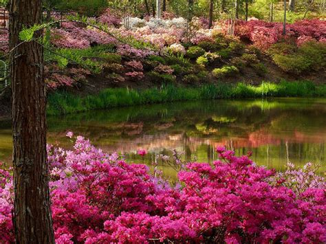 flower garden images images flower garden wallpaper and background