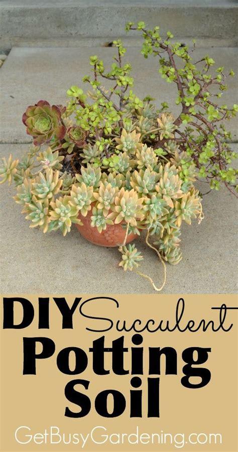 diy succulent potting soil recipe potting soil and