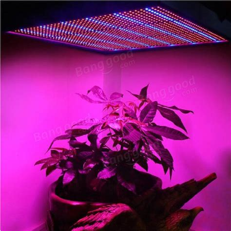100w 1131red 234blue led grow light plant growing l garden greenhouse plant seedling light at