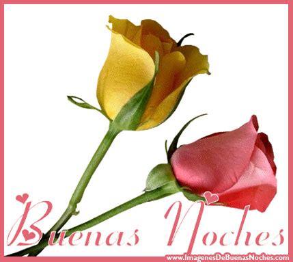 imagenes buenas noches flores rosas rosadas