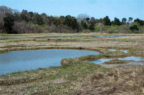 Chappaquiddick Island Association The Vineyard Gazette Martha S Vineyard News Land Bank Conserves 25 Acres On Chappy