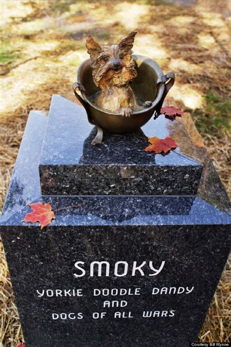 smokey the yorkie smoky the terrier was probably the cutest service member in wwii huffpost