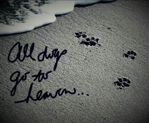 all dogs go to heaven quotes 81 best images about all dogs go to heaven on