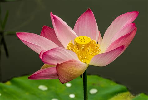 flowers ga fl namajhotography