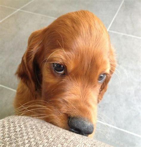 imagenes de whatsapp graciosas de animales imagenes graciosas para whatsapp perros que nos quieren