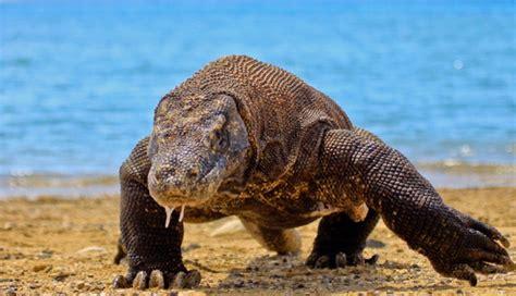 imagenes de animales venenosos los 10 animales mas peligrosos del mundo animales