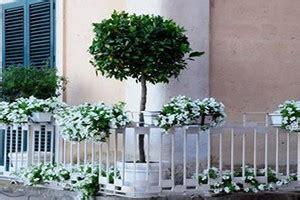 balconi fioriti in inverno gravina si tuffa nella quot notte verde quot