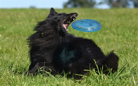 best frisbee best frisbee reviews of the top frisbees for dogs