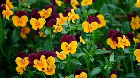 hd images of flowers flowers for flower lovers desktop hd flowers wallpapers