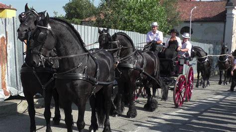 cavalli e carrozze cavalli e carrozze in sfilata a san bernardo ivrea 2016