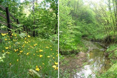parco regionale co dei fiori parco naturale regionale pineta di appiano gentile e
