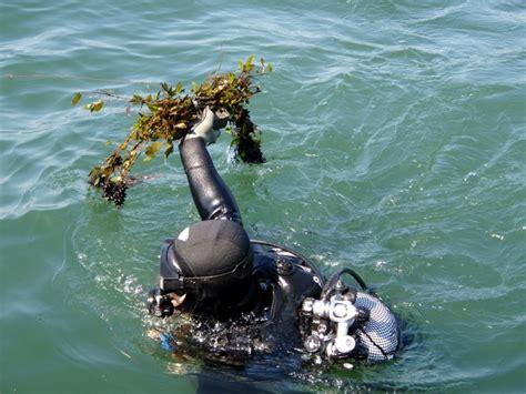 capitaneria di porto torre annunziata guardia costiera contro la pesca di frodo di seppie