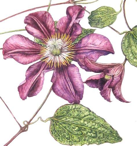 the art of botanical royal botanic garden edinburgh rbge certificate in botanical illustration