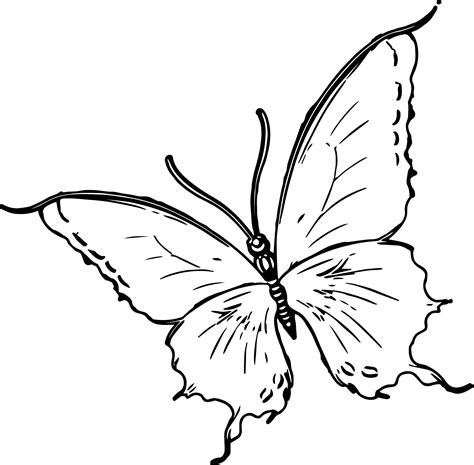 coloring pages of big butterflies flower butterfly ladybug coloring pages large butterfly