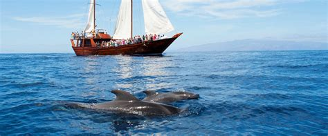 boat trip tenerife tours excursions and things to do in tenerife sunbonoo