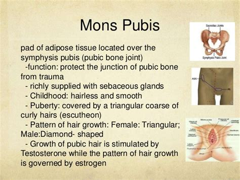 hairless mons anatomy and physiology of the male and female reproductive
