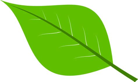 leaf clipart green leaf clip at clker vector clip