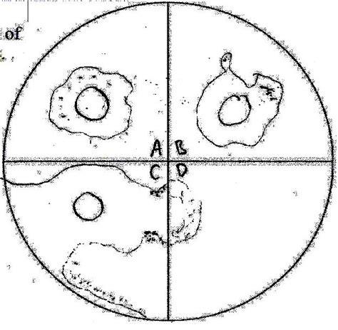 bacteria biology   portfolio