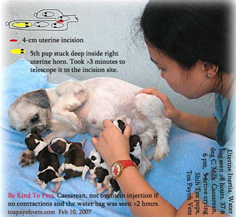 oxytocin for dogs 031208asingapore toa payoh veterinary cat rabbits hamster veterinarian veterinary
