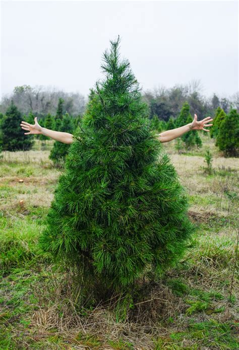 why don t we get the right tree a subtle revelry