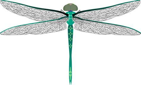 dragonfly clipart clipart teal dragonfly cliparting