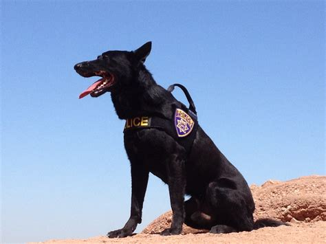 k 9 dogs k9 dogs for sale images