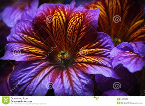 tropical plants chicago purple and yellow tropical flower stock photo image