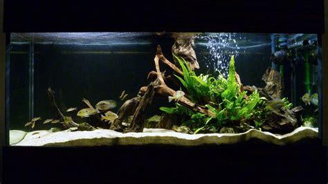 aquarium design for cichlids my south american cichlid tank fish tank pinterest
