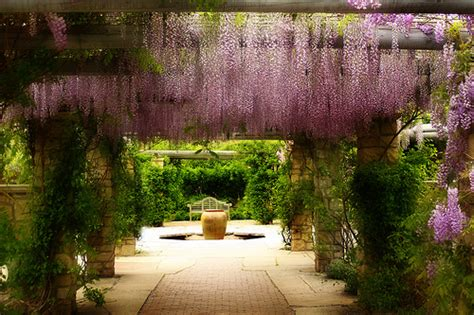Botanical Garden Boise Idaho Wisteria Idaho Botanical Garden Flickr Photo