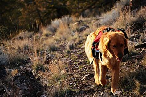 golden retriever hiking lightweight and affordable trailspace