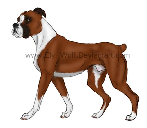 how to boxer dogs boxer by feralhound07 on deviantart