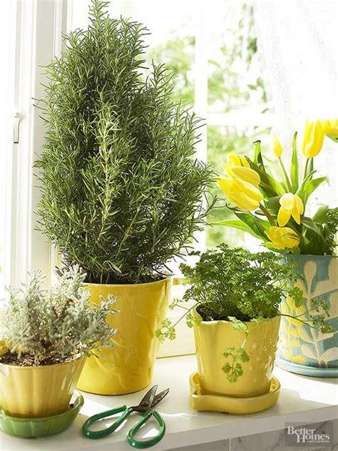grow herbs indoors   youve    sunny