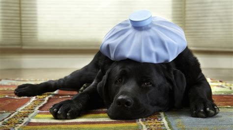 what can cause diarrhea in puppies what causes diarrhea in dogs reference