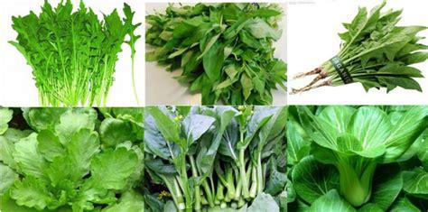 imagenes de hojas verdes comestibles las verduras de hoja verde lo mejor para el intestino