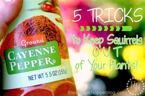 Keep Squirrels Out Of Garden by 5 Tricks To Keep Squirrels Out Of Your Plants The Scrap Shoppe