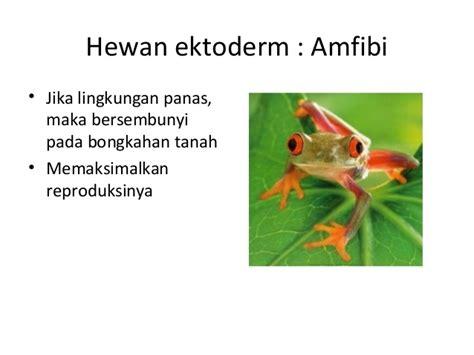 Tempat Makanan Hewan ekologi hewan