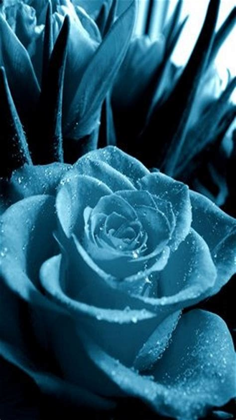 rose themes cell phone blue rose mobile phone wallpapers 360x640 hd wallpaper phone