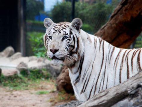 imagenes animales del zoologico imagenes de los animales del zoologico imagui