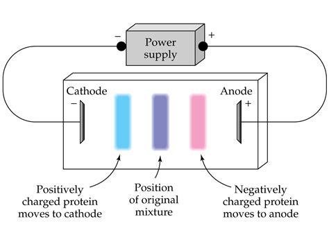 diagram of electrophoresis media portfolio