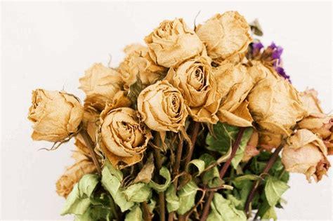 fiori essiccati pensieri parole i fiori essiccati