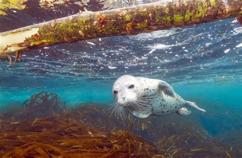 los animales marinos marine los animales marinos mas hermosos