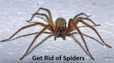 how to get rid of spiders in bedroom how to get rid of spiders