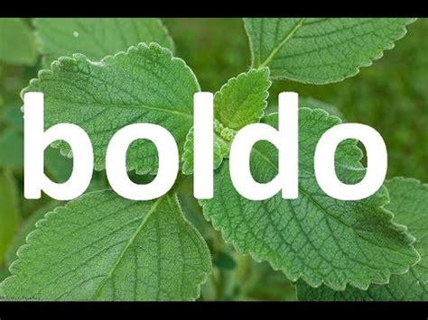 boldo propiedades y beneficios medicinales youtube boldo propiedades y beneficios medicinales youtube plantas